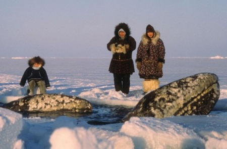Rescuing 3 whales in Alaska (1988)